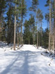 Pine Woods in Winter, Lot 9